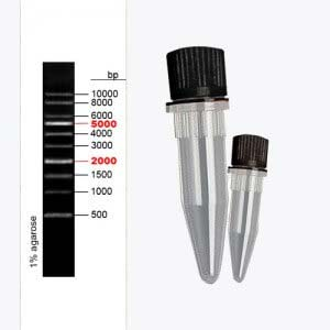 1kbDNA-Ladder
